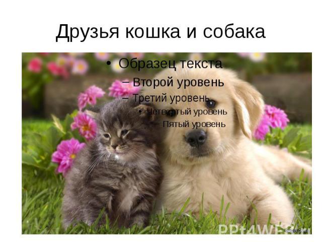 Друзья кошка и собака