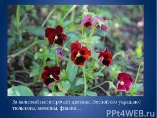 За калиткой нас встречает цветник. Весной его украшают тюльпаны, анемоны, фиалки