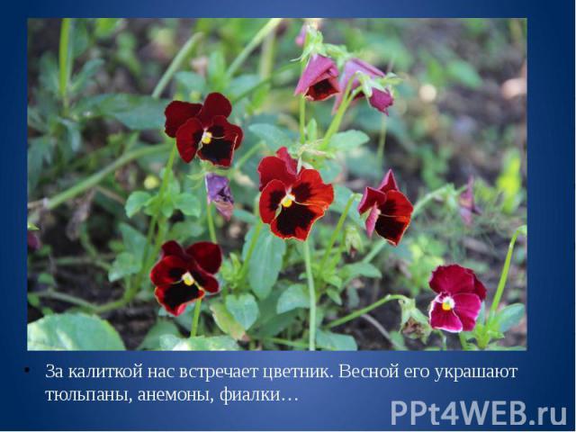 За калиткой нас встречает цветник. Весной его украшают тюльпаны, анемоны, фиалки… За калиткой нас встречает цветник. Весной его украшают тюльпаны, анемоны, фиалки…