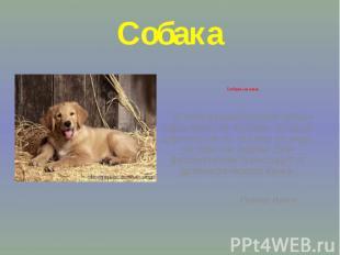 Собака Собака на сене В этом фразеологизме собаку характеризует человек, который
