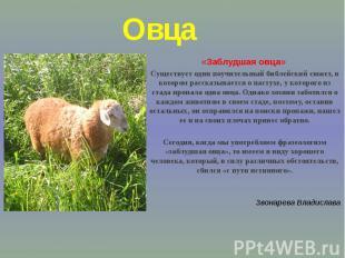 Овца«Заблудшая овца» Существует один поучительный библейский сюжет, в котором ра