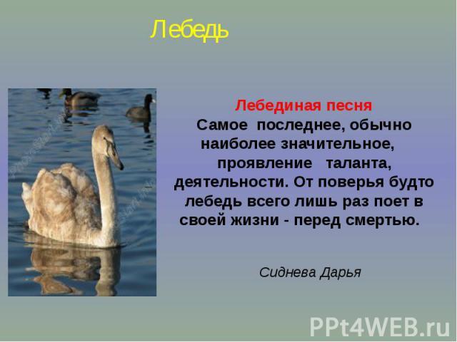 Лебединая песняСамое последнее, обычно наиболее значительное, проявление таланта, деятельности. От поверья будто лебедь всего лишь раз поет в своей жизни - перед смертью. Сиднева Дарья Лебедь