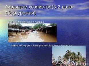 Сельское хозяйство(3-2 раза сбор урожая) Летний сезон(муссон)-Харифа Зимний сезо