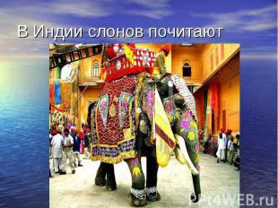В Индии слонов почитают
