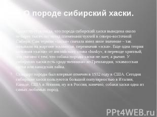 О породе сибирский хаски. Существует легенда, что порода сибирский хаски выведен
