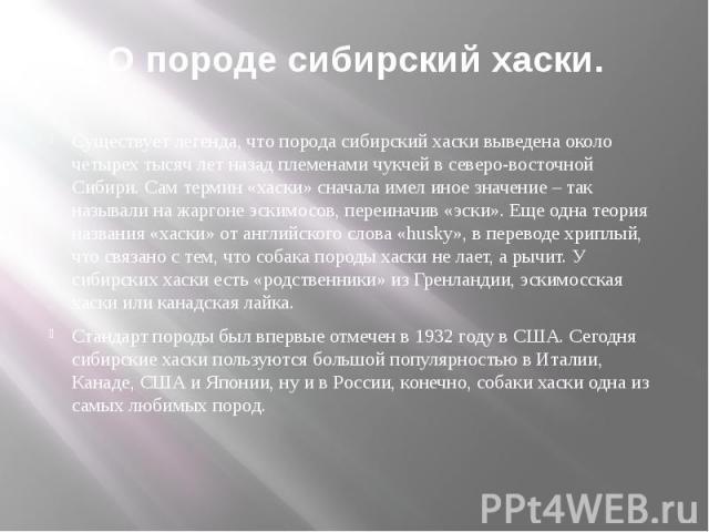 О породе сибирский хаски. Существует легенда, что порода сибирский хаски выведена около четырех тысяч лет назад племенами чукчей в северо-восточной Сибири. Сам термин «хаски» сначала имел иное значение – так называли на жаргоне эскимосов, переиначив…
