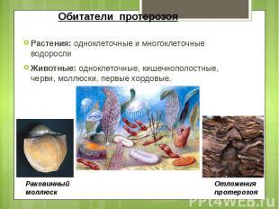 Обитатели протерозоя Растения: одноклеточные и многоклеточные водоросли Животные