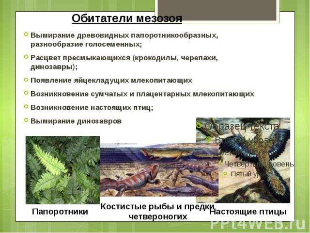 Обитатели мезозоя Вымирание древовидных папоротникообразных, разнообразие голосеменных; Расцвет пресмыкающихся (крокодилы, черепахи, динозавры); Появление яйцекладущих млекопитающих Возникновение сумчатых и плацентарных млекопитающих Возникновение н…