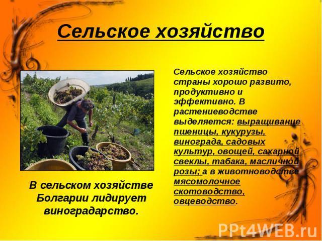 В сельском хозяйстве Болгарии лидирует виноградарство. В сельском хозяйстве Болгарии лидирует виноградарство.