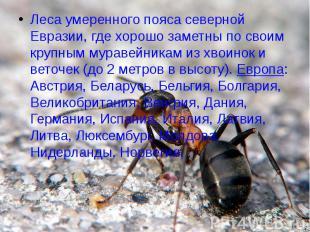Леса умеренного пояса северной Евразии, где хорошо заметны по своим крупным мура