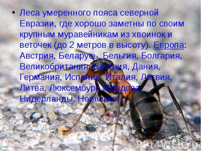 Леса умеренного пояса северной Евразии, где хорошо заметны по своим крупным муравейникам из хвоинок и веточек (до 2 метров в высоту). Европа: Австрия, Беларусь, Бельгия, Болгария, Великобритания, Венгрия, Дания, Германия, Испания, Италия, Латвия, Ли…