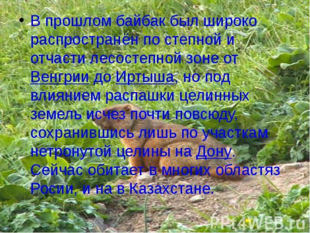 В прошлом байбак был широко распространён по степной и отчасти лесостепной зоне от Венгрии до Иртыша, но под влиянием распашки целинных земель исчез почти повсюду, сохранившись лишь по участкам нетронутой целины на Дону. Сейчас обитает в многих обла…