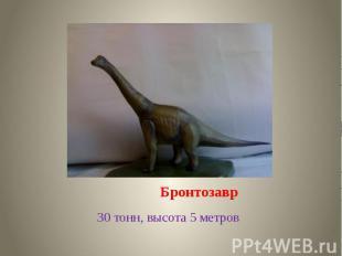 Бронтозавр 30 тонн, высота 5 метров