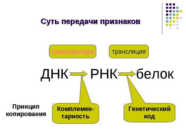Суть передачи признаков транскрипция трансляция Комплемен-тарность Генетический код Принцип копирования