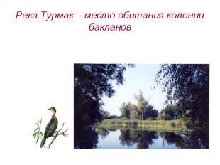 Река Турмак – место обитания колонии бакланов