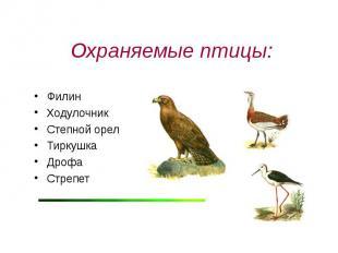 Охраняемые птицы: ФилинХодулочникСтепной орелТиркушка ДрофаСтрепет