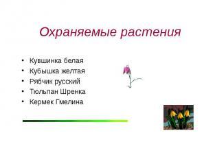 Охраняемые растения Кувшинка белаяКубышка желтаяРябчик русскийТюльпан ШренкаКерм