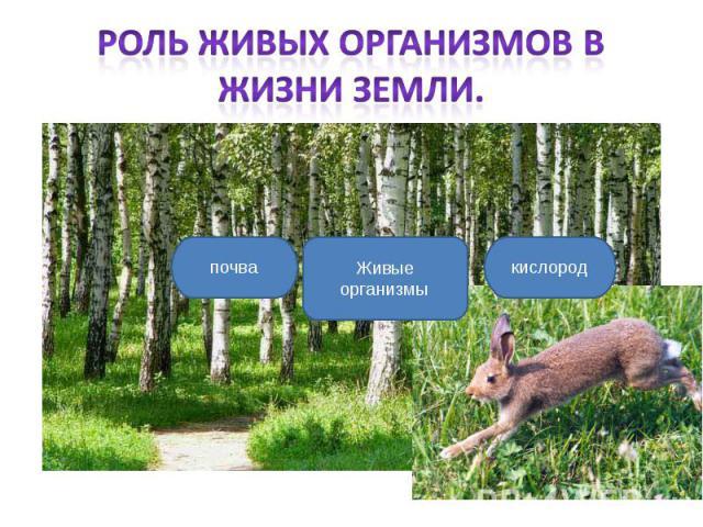 Роль живых организмов в жизни Земли.