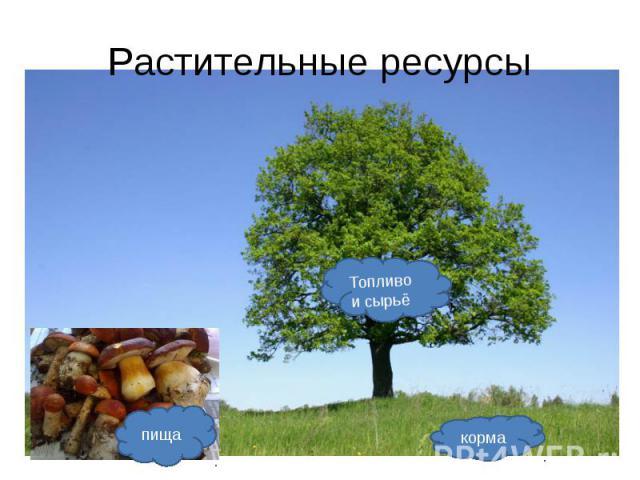 Растительные ресурсы