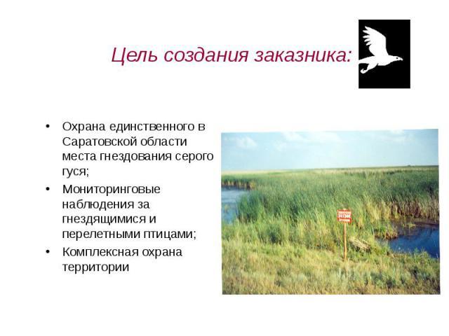 Цель создания заказника: Охрана единственного в Саратовской области места гнездования серого гуся;Мониторинговые наблюдения за гнездящимися и перелетными птицами;Комплексная охрана территории