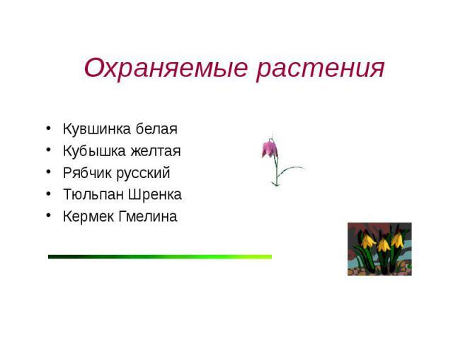 Охраняемые растения Кувшинка белаяКубышка желтаяРябчик русскийТюльпан ШренкаКермек Гмелина