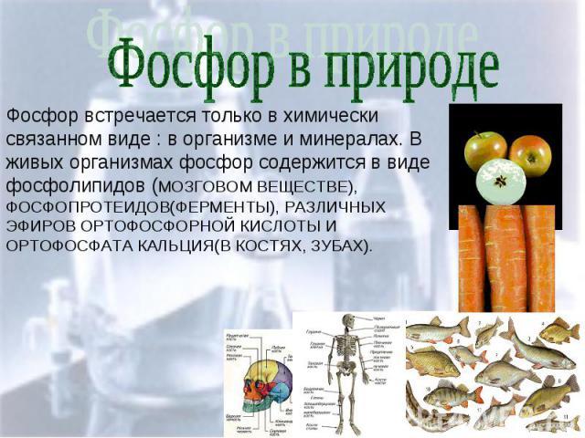 Фосфор встречается только в химически связанном виде : в организме и минералах. В живых организмах фосфор содержится в виде фосфолипидов (МОЗГОВОМ ВЕЩЕСТВЕ), ФОСФОПРОТЕИДОВ(ФЕРМЕНТЫ), РАЗЛИЧНЫХ ЭФИРОВ ОРТОФОСФОРНОЙ КИСЛОТЫ И ОРТОФОСФАТА КАЛЬЦИЯ(В КО…