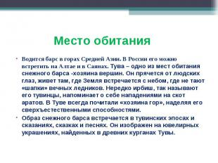 Водится барс в горах Средней Азии. В России его можно встретить на Алтае и в Сая