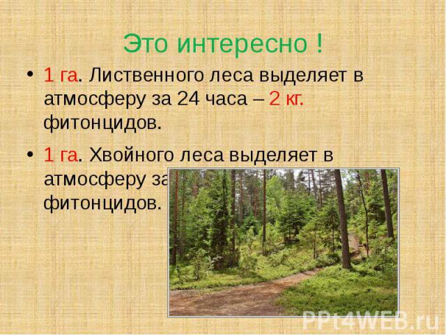 Это интересно ! 1 га. Лиственного леса выделяет в атмосферу за 24 часа – 2 кг. фитонцидов.1 га. Хвойного леса выделяет в атмосферу за 24 часа – 5 кг. фитонцидов.