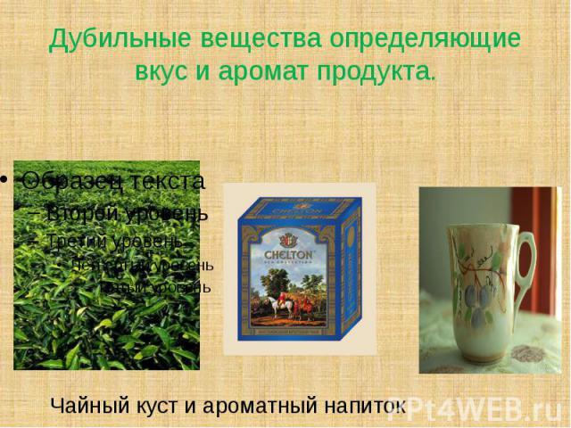Дубильные вещества определяющие вкус и аромат продукта. Чайный куст и ароматный напиток