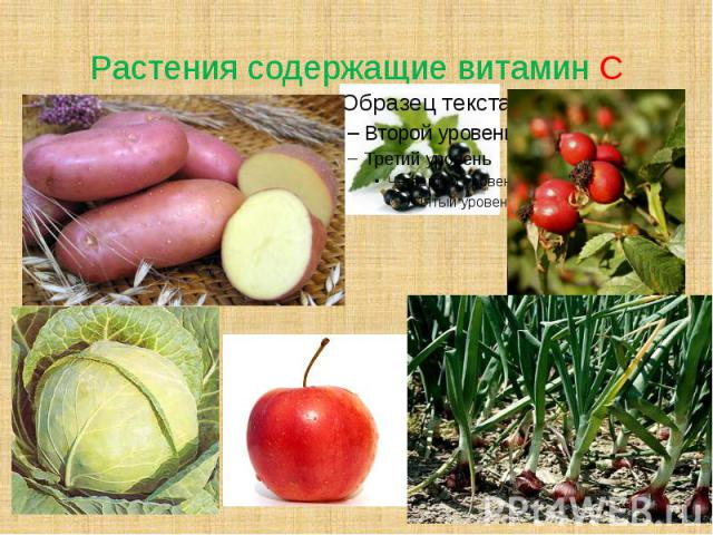 Растения содержащие витамин С