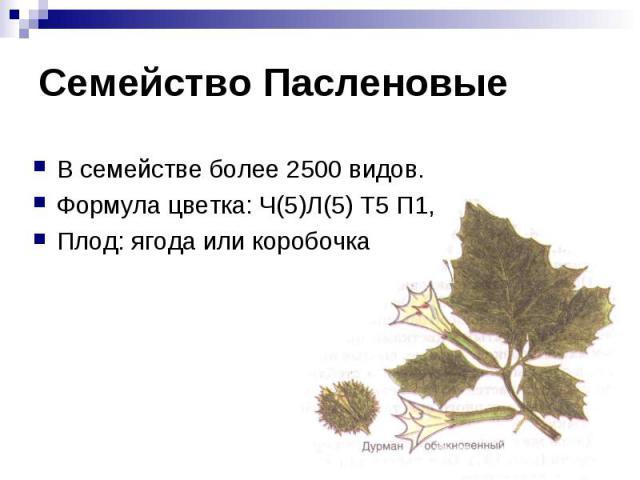 Семейство Пасленовые В семействе более 2500 видов. Формула цветка: Ч(5)Л(5) Т5 П1,Плод: ягода или коробочка