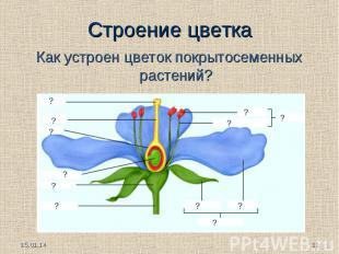Как устроен цветок покрытосеменных растений?