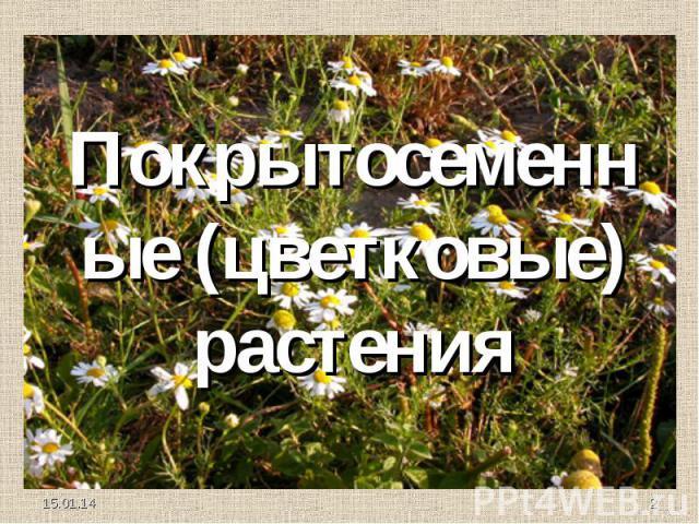 Покрытосеменные (цветковые) растения