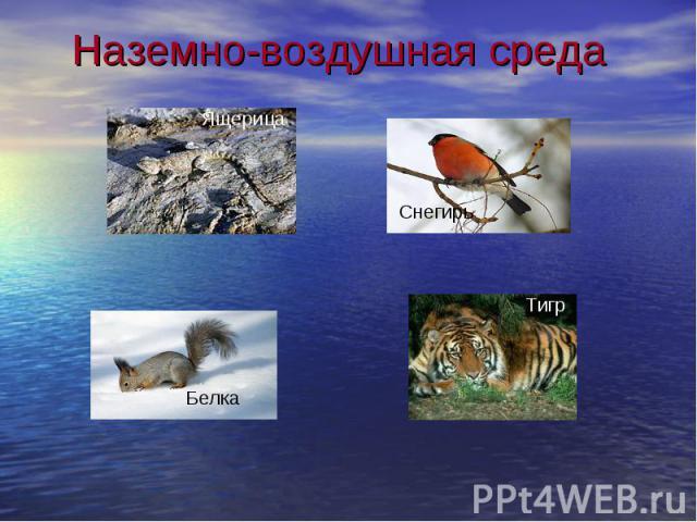 Наземно-воздушная среда