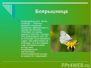 Боярышница (лат. Aporia crataegi) — бабочка, вредная плодовым деревьям, принадле