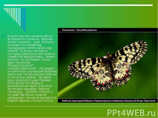 В окрестностях Новороссийска встречается локально, бабочка летает в апреле – мае, отличить ее можно по неровному порхающему полету низко над землей. Гусеницы питаются листьями различных растений из семейства кирказоновых. Зимует куколка. За год быва…