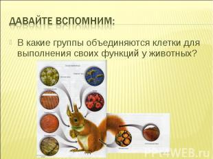 ?В какие группы объединяются клетки для выполнения своих функций у животных?
