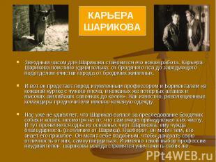 КАРЬЕРА ШАРИКОВА Звездным часом для Шарикова становится его новая работа. Карьер