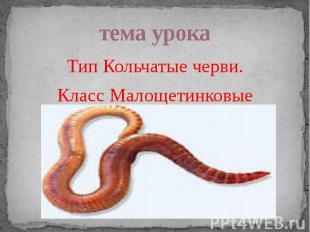 тема урока Тип Кольчатые черви. Класс Малощетинковые