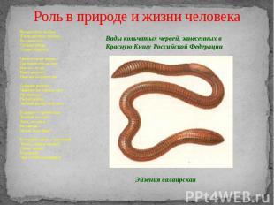 Роль в природе и жизни человека Беспросветно нелегка Жизнь простого червяка: Рас