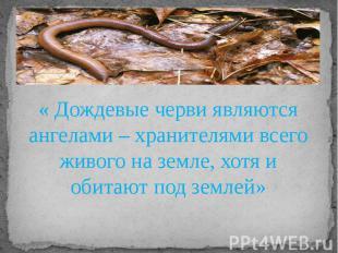 « Дождевые черви являются ангелами – хранителями всего живого на земле, хотя и о