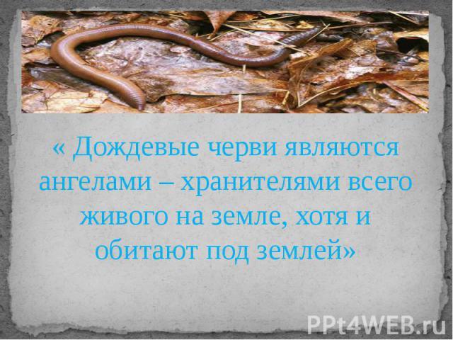 « Дождевые черви являются ангелами – хранителями всего живого на земле, хотя и обитают под землей»