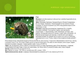 живые организмы Еж Названия: еж обыкновенный, обычный еж, западный европейский е