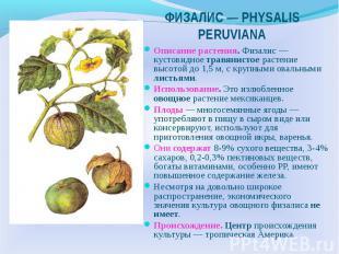 ФИЗАЛИС — РHYSALIS PERUVIANA Описание растения. Физалис — кустовидное травянисто