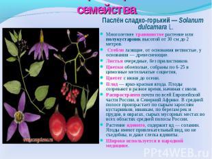 Многообразие растений семейства Паслён сладко-горький — Solanum dulcamara L.Мног