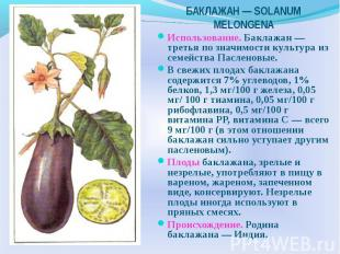 Использование. Баклажан — третья по значимости культура из семейства Пасленовые.
