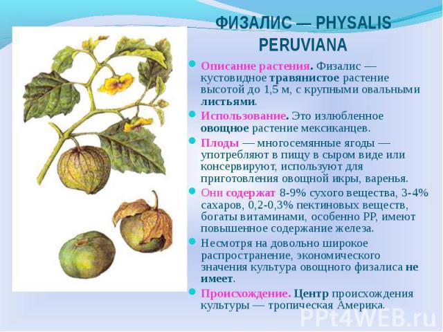 ФИЗАЛИС — РHYSALIS PERUVIANA Описание растения. Физалис — кустовидное травянистое растение высотой до 1,5 м, с крупными овальными листьями. Использование. Это излюбленное овощное растение мексиканцев. Плоды — многосемянные ягоды — употребляют в пищу…