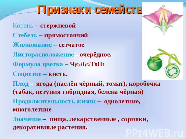 Корень – стержневой Стебель – прямостоячийЖилкование – сетчатоеЛисторасположение– очерёдное.Формула цветка – Ч(5)Л(5)Т5П1 Соцветие – кисть.Плод– ягода (паслён чёрный, томат), коробочка (табак, петуния гибридная, белена чёрная) Продолжительность жи…