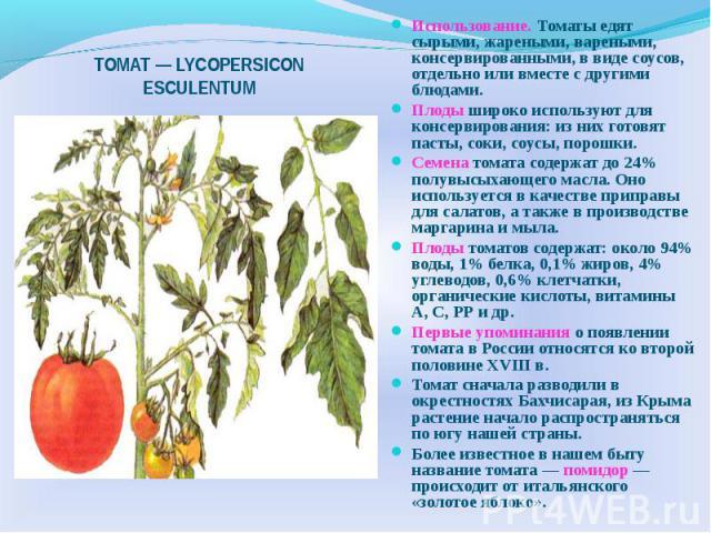 ТОМАТ — LYCOPERSICON ESCULENTUM Использование. Томаты едят сырыми, жареными, вареными, консервированными, в виде соусов, отдельно или вместе с другими блюдами. Плоды широко используют для консервирования: из них готовят пасты, соки, соусы, порошки. …