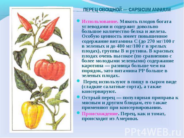 Использование. Мякоть плодов богата углеводами и содержит довольно большое количество белка и железа. Особую ценность имеет повышенное содержание витамина С (до 270 мг/100 г в зеленых и до 480 мг/100 г в зрелых плодах), группы В и рутина. В красных …